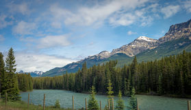 Канадский ландшафт скалистых гор с рекой и соснами Стоковая Фотография
