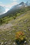 Канадский ландшафт с ледником Бульвар Icefields альбатроса смогите стоковая фотография rf