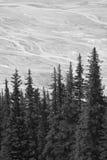 Канадский ландшафт с ледником Бульвар Icefields альбатроса смогите стоковое фото
