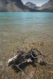 Канадский ландшафт с озером смычк и мертвым хоботом альбатроса стоковые изображения rf