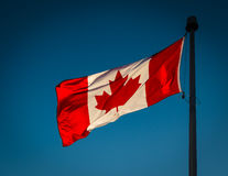Канадский флаг в ветре Стоковое Изображение RF