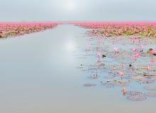 Канал шлюпки в море лилии красной воды Стоковое Изображение