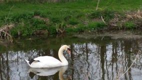 Канал Bridgewater Стоковая Фотография