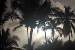 канереечные валы Испании ладони ночи острова fuerteventura Стоковое Изображение