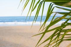 каникула зонтика неба пляжа предпосылки голубая цветастая Пляж с пальмами и голубым морем стоковая фотография