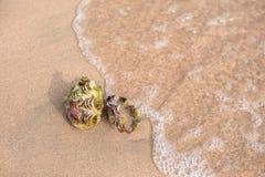 каникула раковины моря принципиальной схемы пляжа песочная стоковое фото