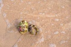 каникула раковины моря принципиальной схемы пляжа песочная стоковая фотография rf