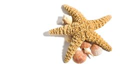 каникула starfish пляжа Стоковые Изображения