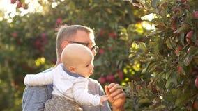 Каникулы в деревне Прогулка деда и внука в яблоневом саде Сбор, заходящее солнце, прогулка осени сток-видео