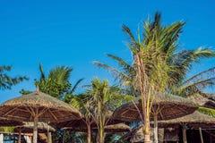 Каникулы в тропических странах Шезлонги, зонтик и ладони на пляже стоковое изображение