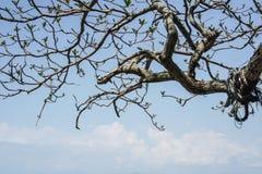 Каникулы как небо острова вне дверь Море и пляж красивой воды лета природы голубое brampton стоковая фотография rf