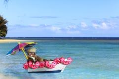 Каникулы Hawaiian кота стоковые фото