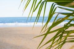 каникула зонтика неба пляжа предпосылки голубая цветастая Пляж с пальмами и голубым морем Стоковое Фото