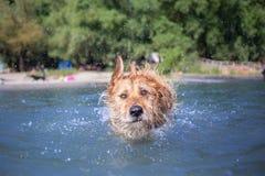 каникула собаки Стоковая Фотография