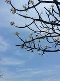 каникула территории лета katya krasnodar стоковое фото