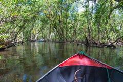 Каное пересекая канал мангровы под деревья Стоковое Изображение RF