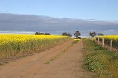 Канола, след фермы, старый сарай фермы Стоковые Изображения