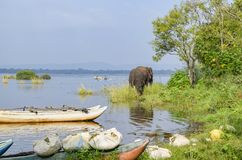 Каноэ и elephat стоковое фото rf