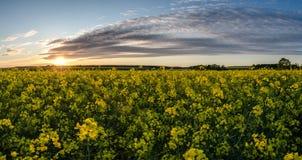 Канола заход солнца поля Стоковые Изображения