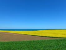 Канола поле и море Стоковое фото RF