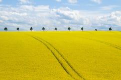 Канола поле и романтичное небо стоковое изображение rf