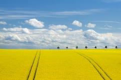 Канола поле и романтичное небо Стоковое Изображение