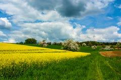 Канола поле Стоковое Фото