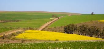Канола поле Lanscape Стоковые Изображения RF