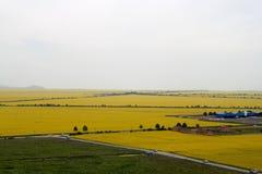 Канола поля цветка Стоковые Изображения RF