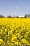 Канола flowers.JH Стоковое Изображение