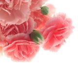 Канцелярские принадлежности цветка стоковые фото