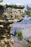 каньон бонзаев грандиозный Стоковое Изображение RF