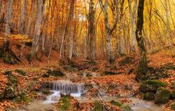 Каньон во времени осени Стоковая Фотография