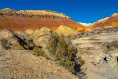 Каньон в национальном заповеднике Altyn Emel kazakhstan Стоковые Изображения