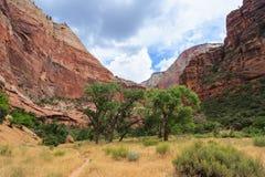 Каньон в национальном парке Сиона в Юте стоковое изображение