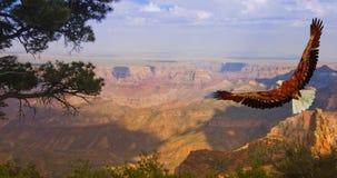 каньон грандиозные США Стоковое Изображение