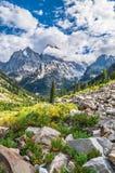 Каньон каскада - грандиозный национальный парк Teton стоковые фотографии rf