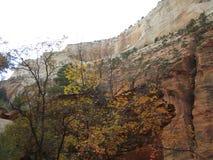 Каньон, национальный парк Сиона, Юта Стоковое фото RF