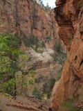 Каньон, национальный парк Сиона, Юта Стоковые Изображения RF