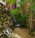 Каньон петь на следе заусенца Стоковая Фотография RF