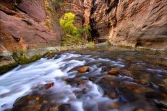 каньон суживает zion стоковое изображение