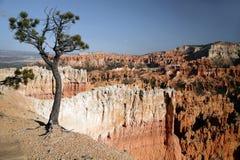 каньон США Юта bryce Стоковая Фотография