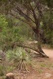 Каньон тропы Eagles Стоковое Изображение