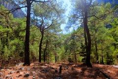 Каньон ущелья Samaria деревьев, Крит, Греция Стоковое фото RF