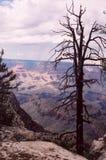 каньон 10 грандиозный Стоковые Изображения RF