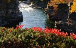 каньон abisko стоковые изображения