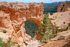 Каньон Bryce, естественный мост Стоковые Изображения