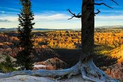Каньон Bryce на заходе солнца Стоковая Фотография RF