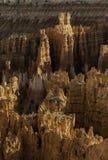 Каньон Bryce на этап восхода солнца Стоковое Изображение