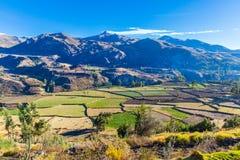 Каньон Colca, Перу, Южная Америка.  Incas для того чтобы построить террасы сельского хозяйства с прудом и скалой. стоковая фотография